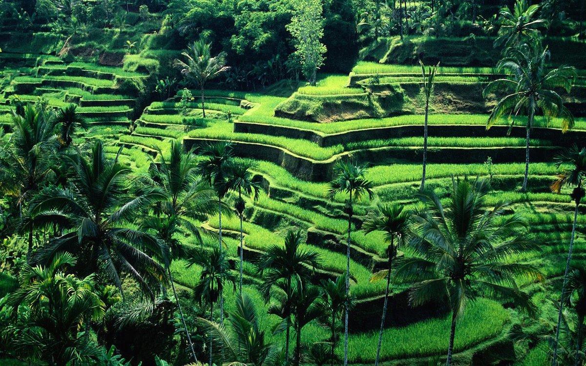 Organizzare Un Viaggio Nel 2014 Bali Indonesia Dario